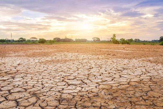 Коричневая сухая почва или растрескавшаяся земля Premium Фотографии