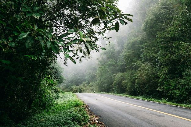 自然林と熱帯雨林の霧の道のある道。 Premium写真