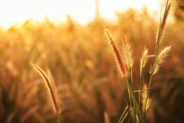 背景のグラデーションで作られた色とりどりの花草 Premium写真