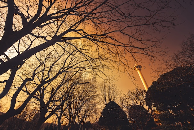 韓国釜山の日没でシルエットの大きな木の釜山タワー。 Premium写真