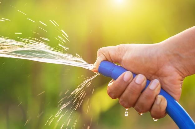水のホースを保持し、屋外の庭で植物に水を注ぐ手 Premium写真