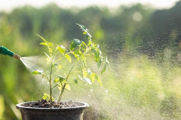 水を掛けて庭の若い植物にスプレーする手 Premium写真
