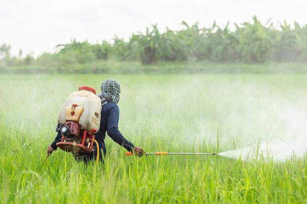 若い緑の田んぼに化学薬品を吹き付けて農業をする農業従事者 Premium写真