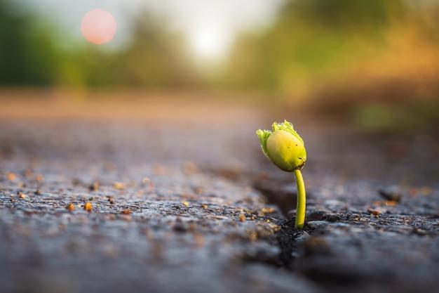 アスファルト道路の亀裂から生える木の緑の若い種。環境コンセプト Premium写真