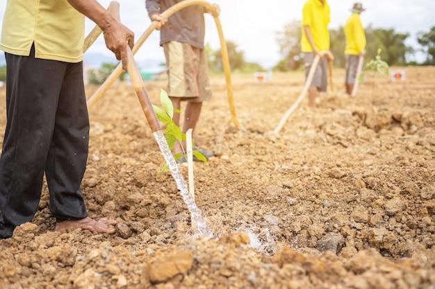 タイの王の誕生日を祝うために木を植える人々 Premium写真