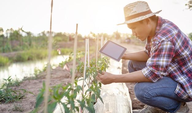 タブレットを使用して、彼の植物や野菜(チリの木)をチェックするアジアの農家 Premium写真