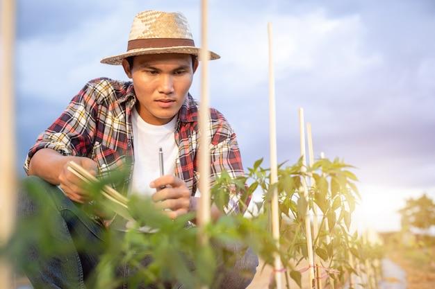 アジア農家のノートを保持し、彼の植物や野菜(チリの木)をチェック Premium写真