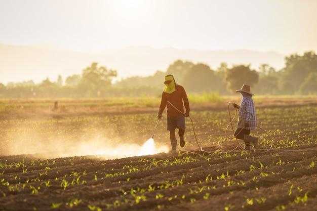 Азиатский фермер работает в поле и распыления химикатов Premium Фотографии
