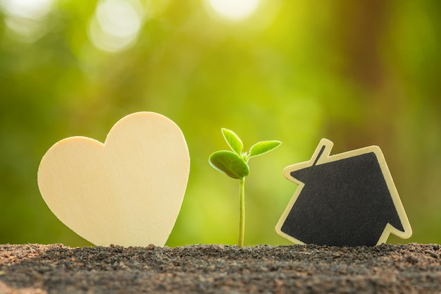 Зеленый росток, растущий в почве и деревянный символ сердца и дома на открытом солнечном свете и зеленое размытие дерево любви, спасти мир или концепция выращивания и окружающей среды Premium Фотографии