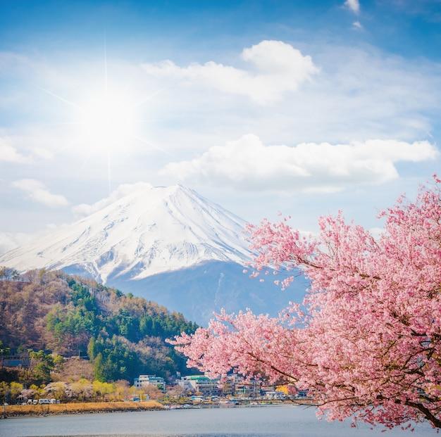 Гора фудзи весной, вишневый цвет сакура Premium Фотографии
