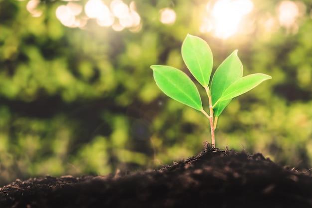 若い植物の苗の新しい生命は黒い土で育ちます Premium写真