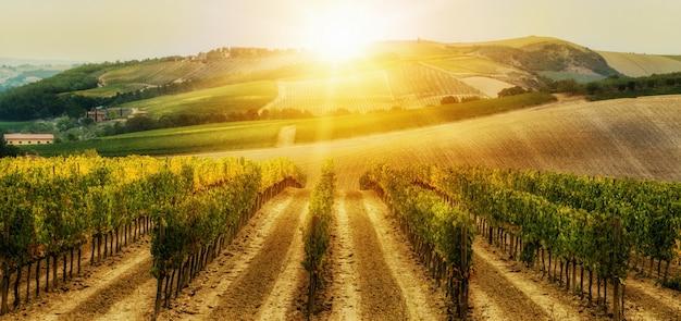 Виноградник пейзаж в тоскане, италия. Premium Фотографии