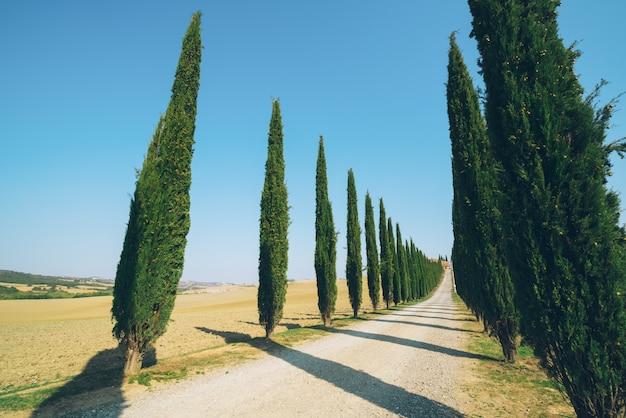 Ландшафт тосканы дороги кипарисов в италии. Premium Фотографии
