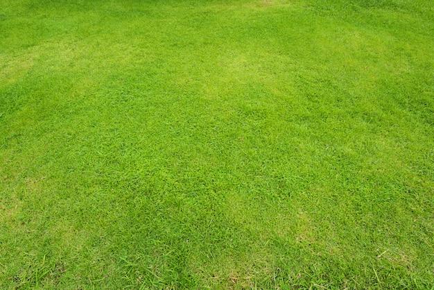 自然の緑の芝生の背景と質感、緑の芝生フィールドの背景 Premium写真