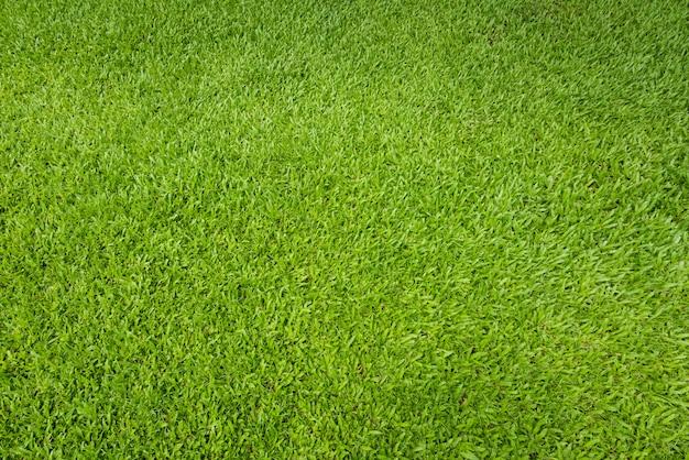 緑の芝生の背景と織り目加工、上面図とサッカー場で芝生の床の詳細 Premium写真