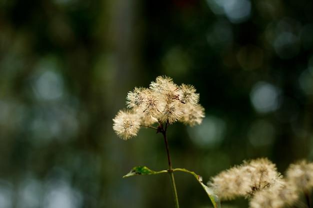 秋の草原の花。 Premium写真