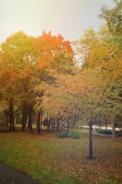 Красивый парк с деревом и красочные листья на зеленой траве осенью. Premium Фотографии