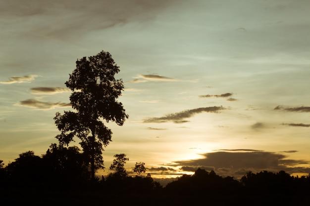 夕暮れの空と木の雨雲。高いレベルのノイズ。雲と夜の空。 Premium写真