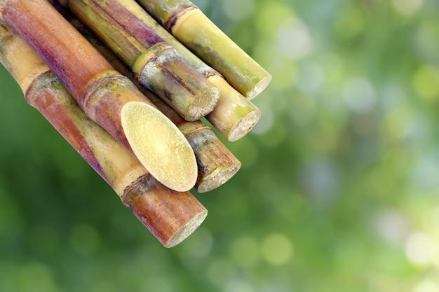 サトウキビ、サトウキビ、新鮮なサトウキビピース、サトウキビ Premium写真