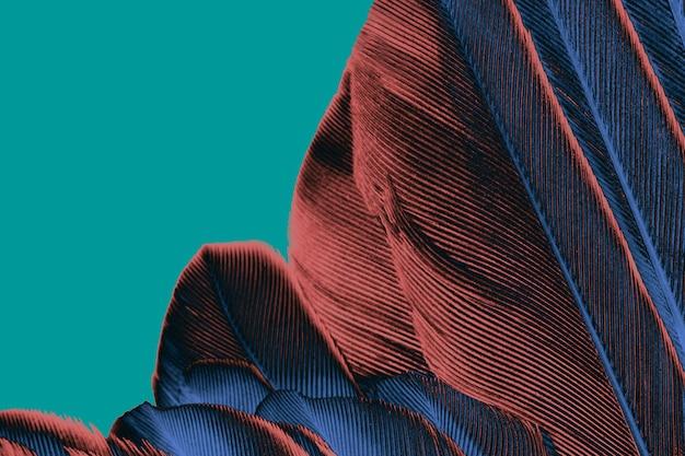 美しい羽のパターンのテクスチャの背景 Premium写真