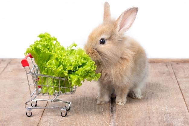 木製のテーブルの上の買物車で有機レタスを食べるかわいい赤ちゃんウサギ。 Premium写真