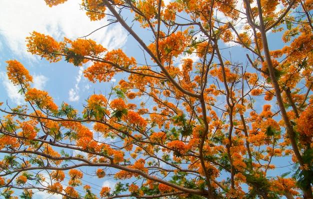 木の上の空の花 Premium写真