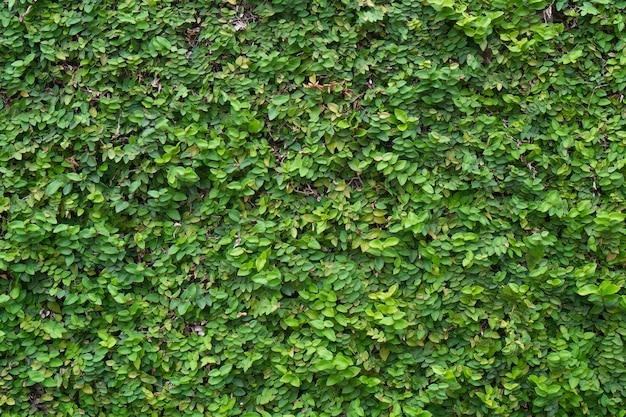 緑の植物の壁 Premium写真