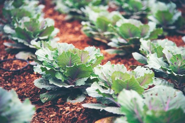 Технология выращивания овощей в теплицах Premium Фотографии