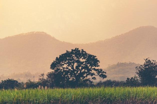 Оранжевый и желтый закат с силуэтами гор Premium Фотографии