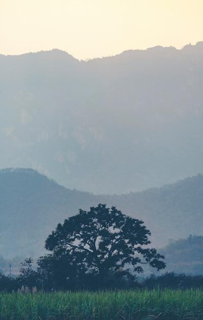 Дерево в тропическом лесу Premium Фотографии
