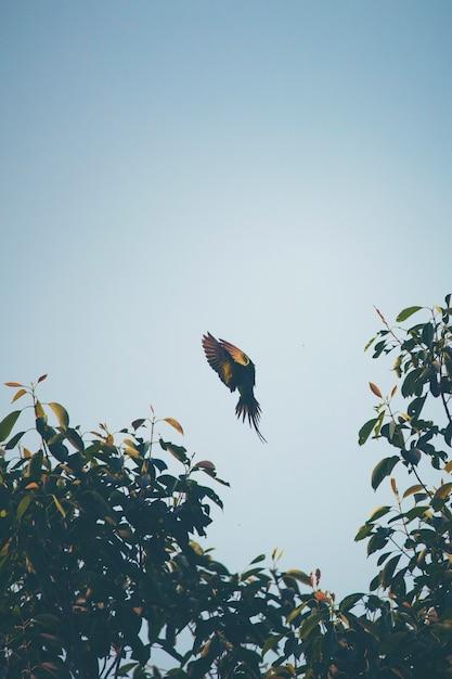 Летающее действие птицы Premium Фотографии