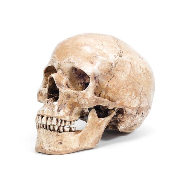 Один человеческий череп на белом фоне Premium Фотографии