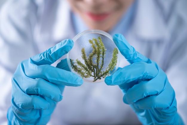 藻類を含むバイオ燃料実験室、研究実験、医療実験室での教育デモンストレーション Premium写真