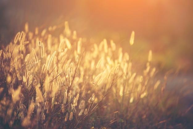 美しい野生の花、夕日 Premium写真