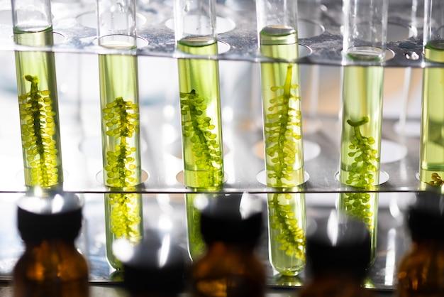 実験室藻類のバイオ燃料産業におけるバイオバイオリアクター Premium写真