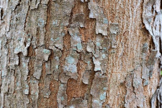 木の樹皮のテクスチャ背景 Premium写真