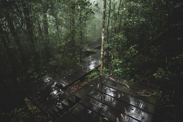 熱帯林、カオヤイ国立公園、タイの眺め Premium写真
