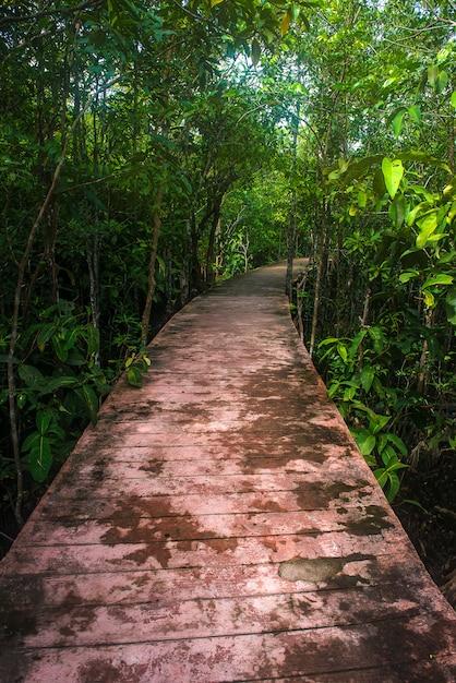 マングローブ林の道 Premium写真