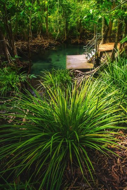 茂みと湖のマングローブ林 Premium写真
