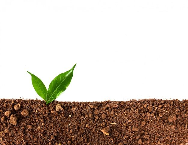 分離された土壌から成長する緑の芽 Premium写真