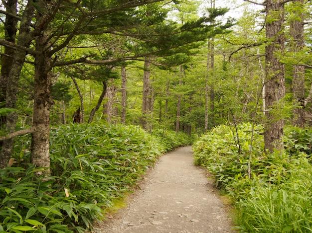 森の中の木の下の通路 Premium写真