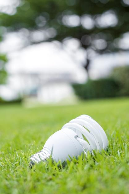Трава репешок картинки зятя разместились