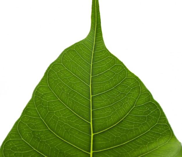 葉の繊維パターン Premium写真