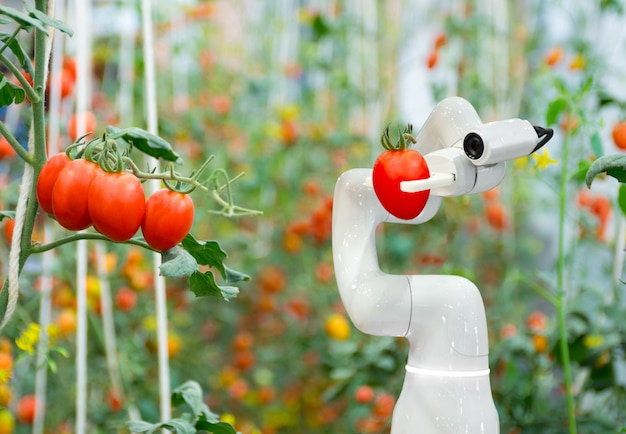Умные роботы-фермеры помидор в сельском хозяйстве футуристический робот автоматизации для работы, чтобы повысить эффективность Premium Фотографии