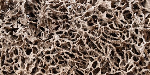 家の中で木や紙を食べるシロアリの巣。 Premium写真