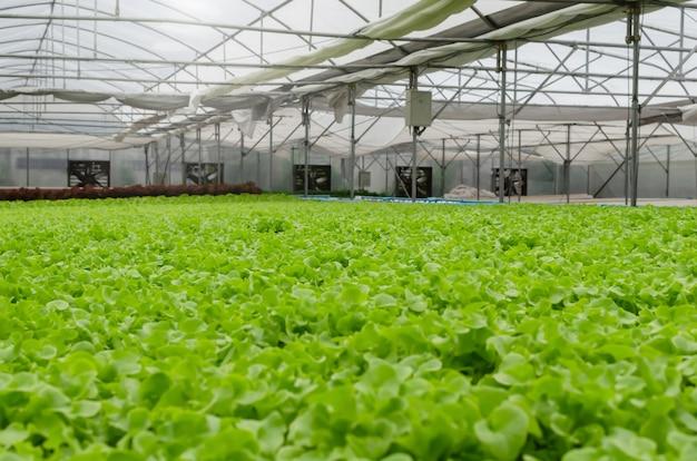 温室の庭の保育園、農業ビジネス、スマート農業技術、ビジネス農家、健康食品のコンセプトで有機水耕新鮮な緑野菜のインテリア屋内ビューを生成します。 Premium写真