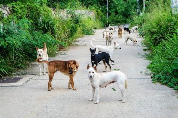 野良犬は荒野を通過した人々からの食べ物を待っています Premium写真