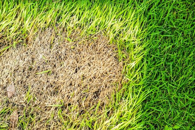 乾いた草の面積は成長できない、何かがこれを覆い、日光がない Premium写真