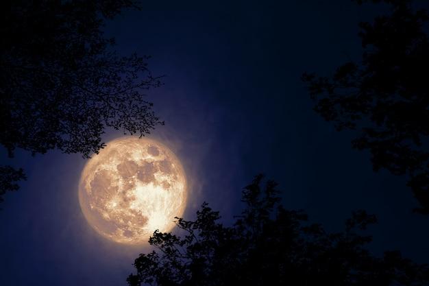 Полная бобровая луна возвращается на темное облако на силуэт дерева и ночное небо Premium Фотографии