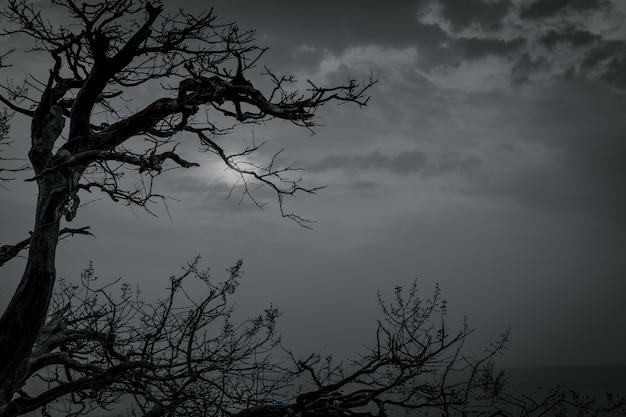 死と平和のための暗い劇的な空と白い雲のシルエットの枯れ木。ハロウィーンの日 。絶望と絶望的なコンセプト。自然の悲しみ。死と悲しい感情 Premium写真